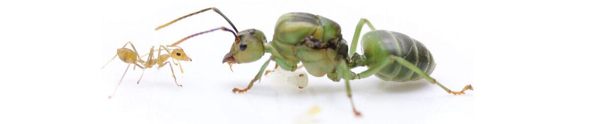 www.ants.hu